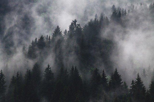 fir-trees-1835402_640