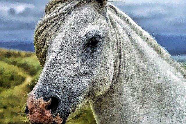 Jaký původ má koňská hlava vposteli?